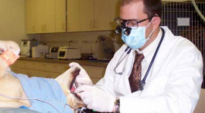 great-hearts-animal-hospital-of-chandler-professional-dental