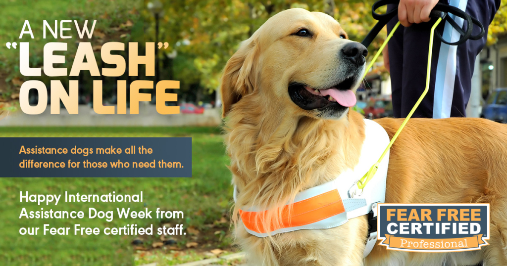 International-Assistance-Dog-Week-1